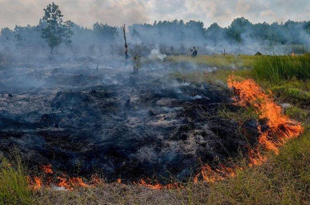 اندونزی در پی جبران خسارت آتش سوزی های جنگلی