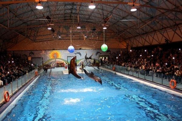 دلفیناریوم برج میلاد تعطیل شد ، منتظر انتقال دلفین و شیر آبی هستیم