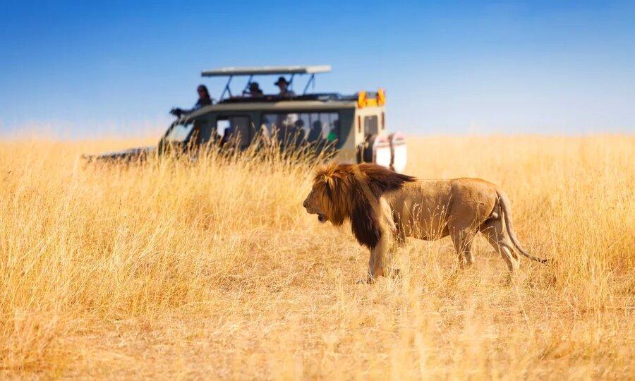صنعت 29 میلیارد دلاری سافاری در معرض تهدید ، صنعت گردشگری حیات وحش آفریقا از کار افتاد