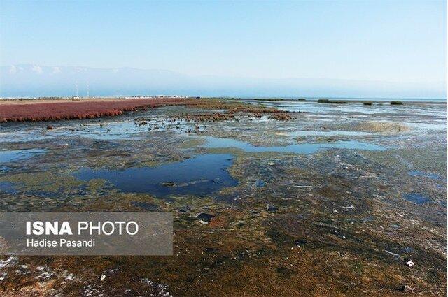آژیر خطر خشک شدن خلیج گرگان به صدا درآمد