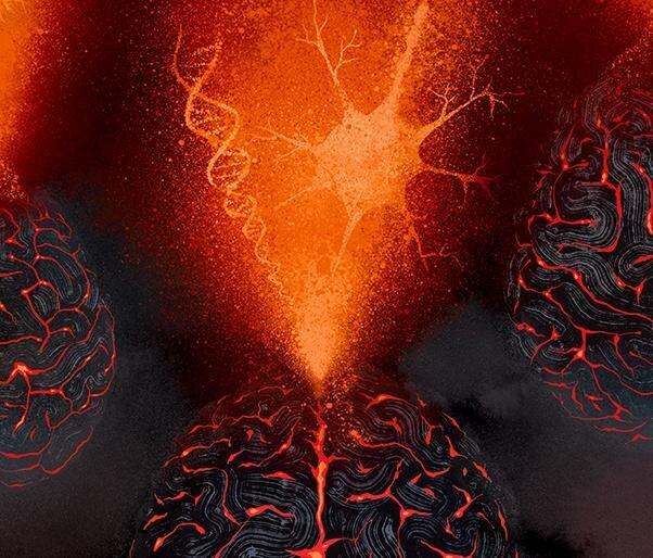 داشتن حافظه خوب، ژنتیکی است