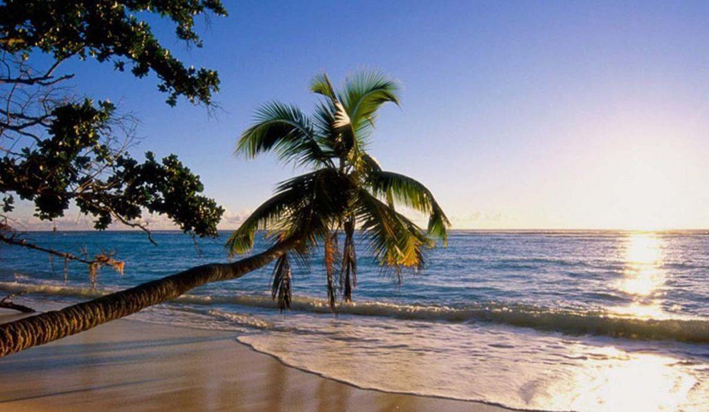 با ساحل درختان نارگیل کیش آشنا شوید