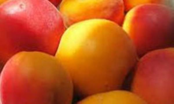 بایدهای بهداشتی مصرف میوه های تابستانی